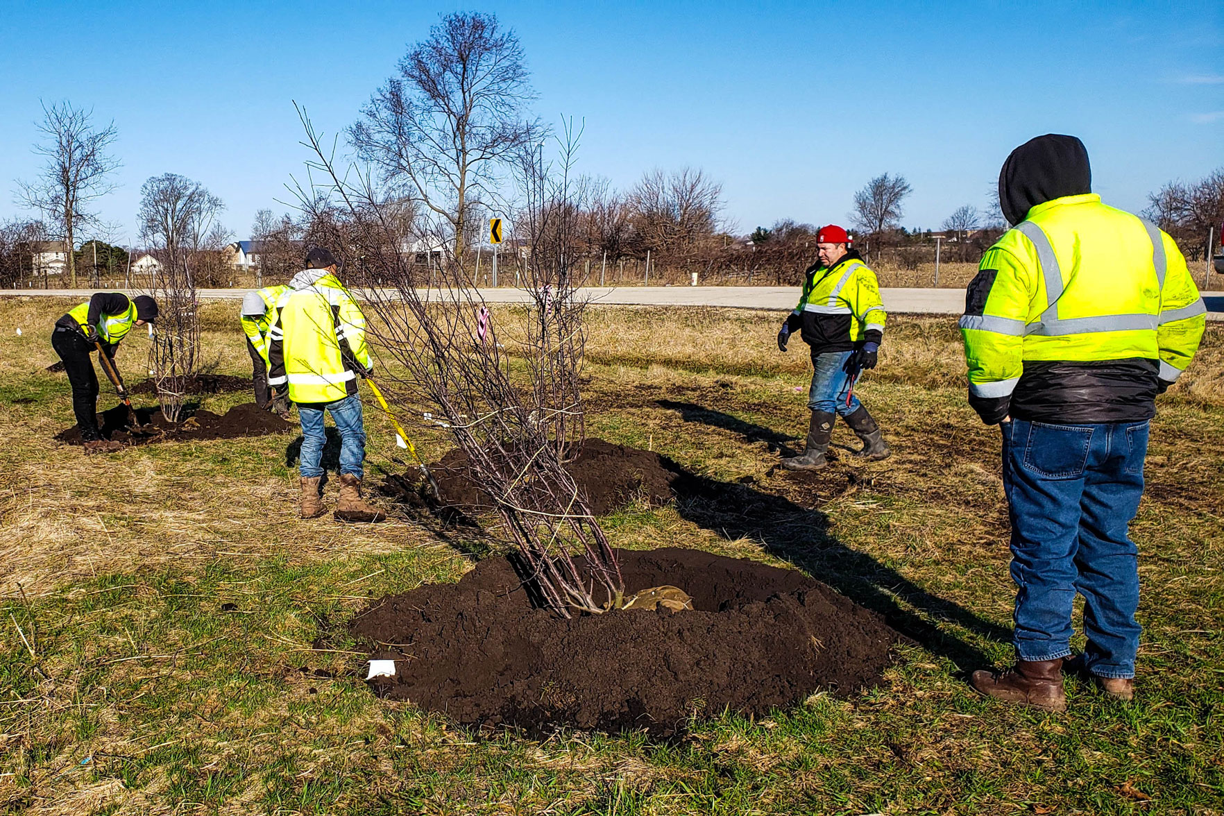 upland Illinois tollway planting trees